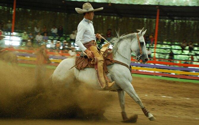 caballos y toros_lacantera02