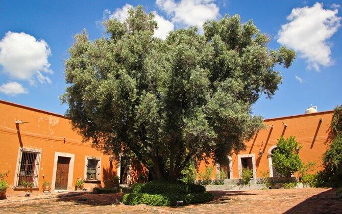 jardin_olivo_lacantera01