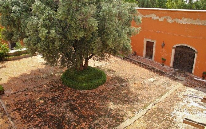 jardin_olivo_lacantera04
